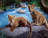 Y-A3.3  RA3222 Paint By Number Set Leopard Cubs 40x30cm