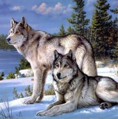 Z127 Diamond Painting Set Square Stones Full Wolves 35x35cm