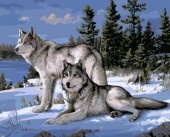 Y-C1.3  MS8559 Paint By Number Set Wolves 50x40cm