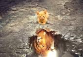 R-C4.1 Diamond Painting Set  Cat - Lion 50x40cm