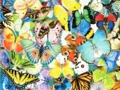 T-H4.2 GD75012 Diamond Painting Set Butterflies 40x30cm