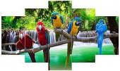 Q-J3.1 FF051 Diamond Painting Set Parrots 5 Frames