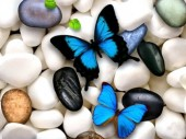 T-G7.1 Q159 Diamond Painting Set Pebbles Butterflies 30x20cm
