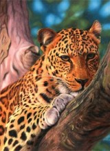 Z-B2.5 RA3134 Paint By Number Set Leopard 40x30cm