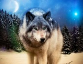 Y-A5.1 S817 Diamond Painting Set Wolf 50x40cm
